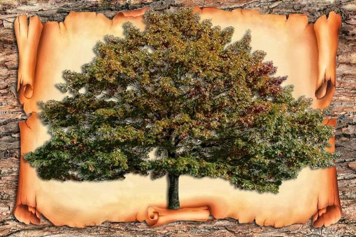 Как сделать родовое дерево в фотошопе видео