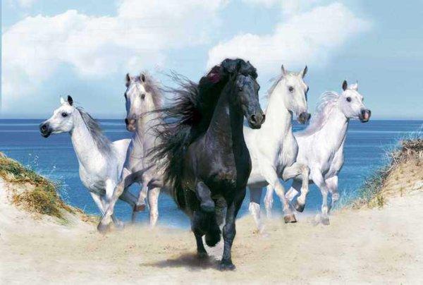 018 Лошадь