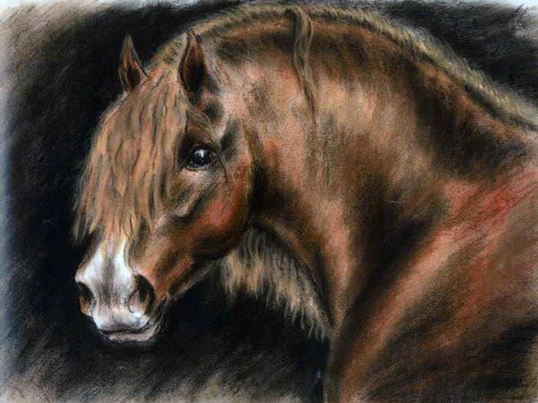 020 Лошадь