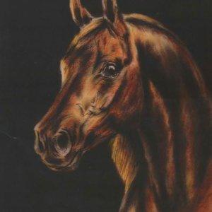 021 Лошадь