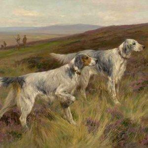 031 Arthur Wardle - Two English setters on a grouse moor