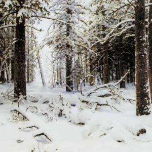 269 Шишкин, И.И. Зима