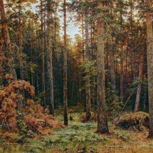285 Шишкин, И.И. Сосновый лес