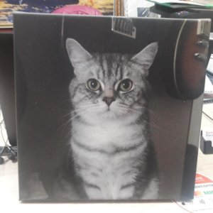 Печ\х «Кот» галерейная натяжка 30х30 см – О224