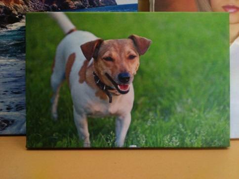 Картина «Собачка» галерейная натяжка 23х34,7 см - П239