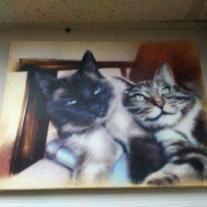 Печ/х «Коты» галерейная натяжка с покрытием фактурным гелем 30х40 см – Щ237
